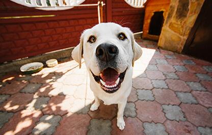 Jaki powinien być kojec dla psa? Najważniejsze zasady